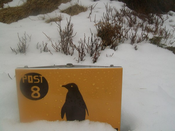 Penguin long way from home.