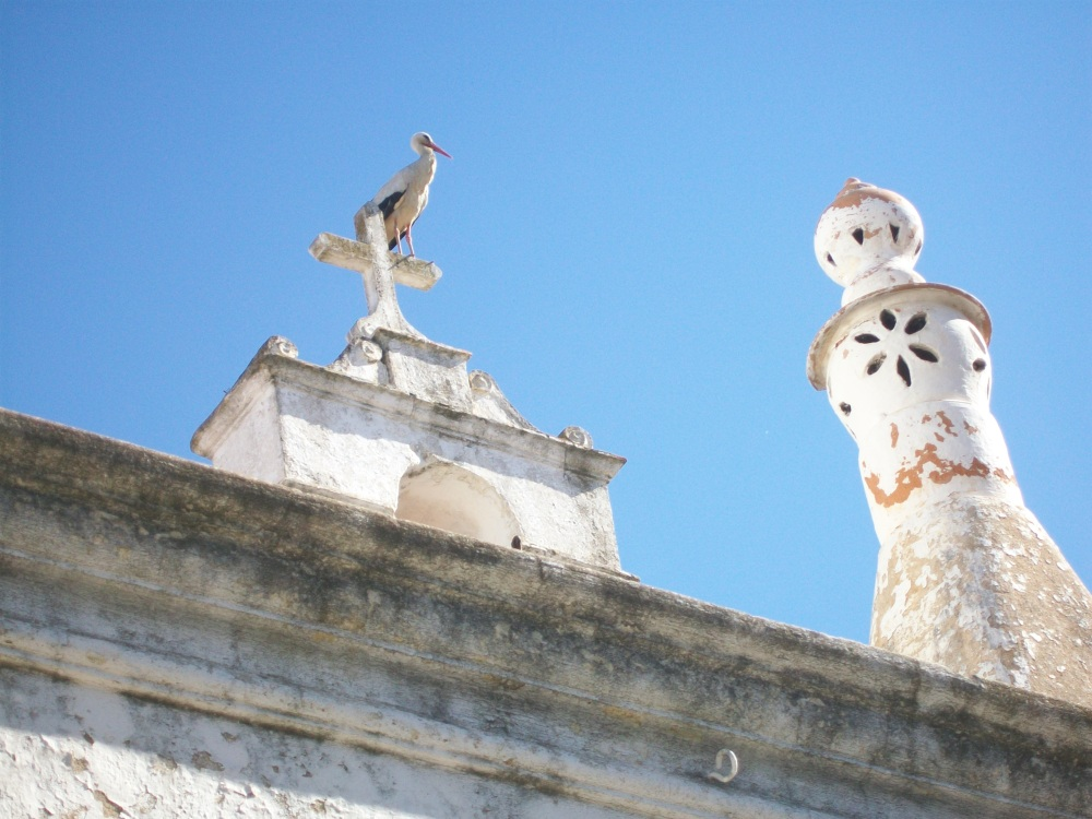 Storks of Faro, Portugal Photos (2/6)
