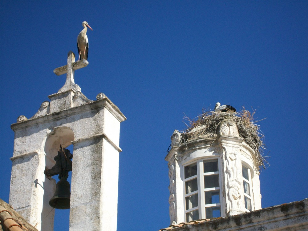 Storks of Faro, Portugal Photos (4/6)