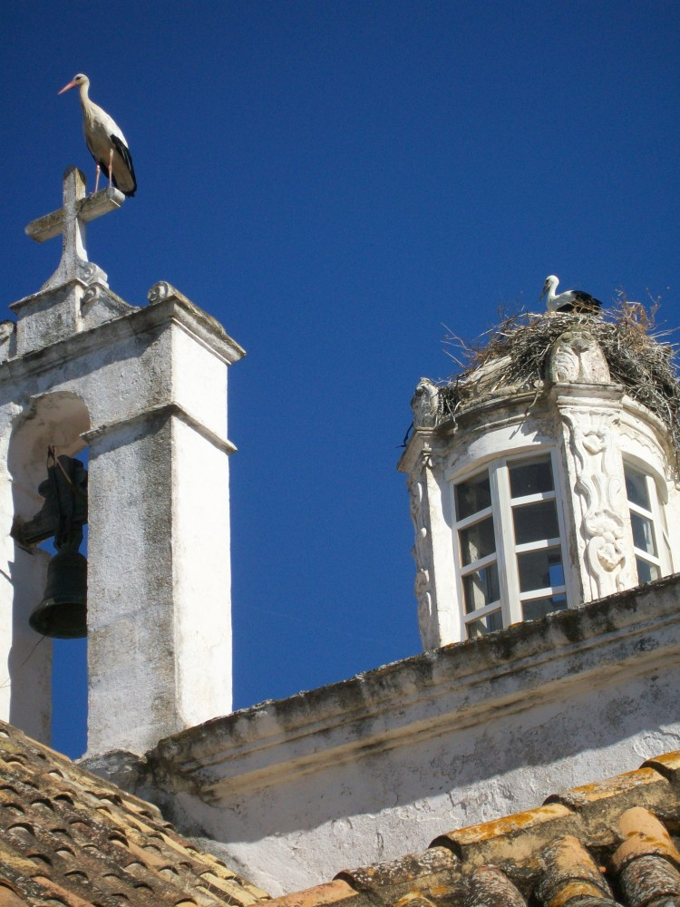 Storks of Faro, Portugal Photos (6/6)