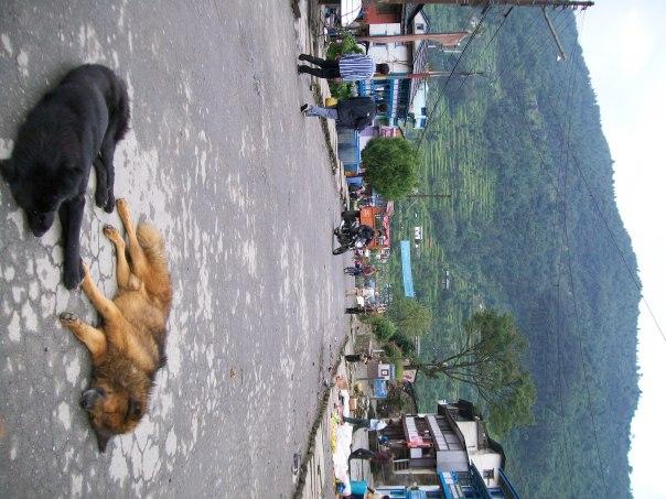Nepal 014